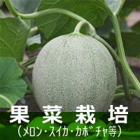 果菜(メロン・スイカ・カボチャ等) 栽培