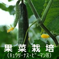 果菜(キュウリ・ナス・ピーマン) 栽培