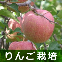 りんご栽培
