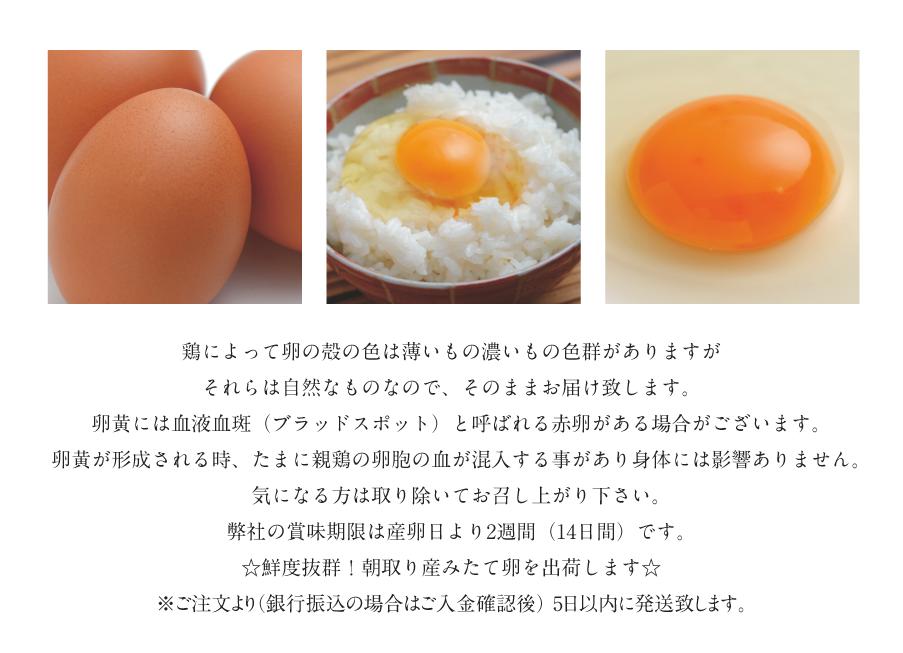 鶏によって卵の殻の色は薄いもの濃いもの色群がありますがそれらは自然なものなので、そのままお届け致します。<br />  卵黄には血液血斑(ブラッドスポット)と呼ばれる赤卵がある場合がございます。<br />  卵黄が形成される時、たまに親鶏の卵胞の血が混入する事があり身体には影響ありません。<br />  気になる方は取り除いてお召し上がり下さい。<br />  弊社の賞味期限は産卵日より2週間(14日間)です。<br /> ☆鮮度抜群!朝取り産みたて卵を出荷します☆<br /> ※ご注文より(銀行振込の場合はご入金確認後) 5日以内に発送致します。